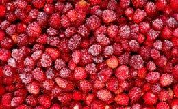 冷冻草莓作为背景 免版税库存图片