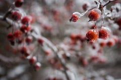 冷冻莓果 库存照片