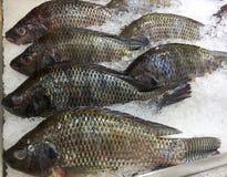 冻尼罗罗非鱼鱼 图库摄影