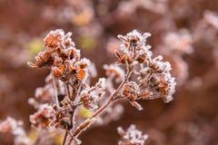 冻干植物 宏观射击 库存照片