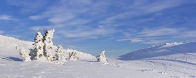 冻树在一个多雪的冬天在特吕西尔,挪威环境美化 免版税库存图片
