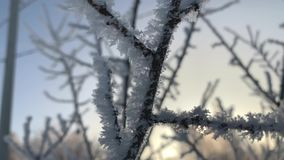 冻树在冬时,特写镜头录影的清早 影视素材