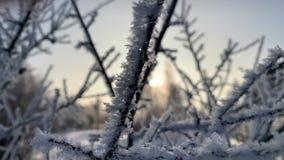 冻树在冬时,特写镜头录影的清早 股票视频