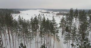 冻树空中英尺长度在雪的 降雪 苹果覆盖花横向草甸本质星期日结构树 股票视频