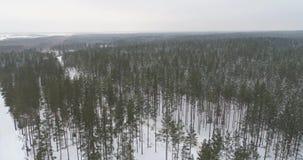 冻树空中英尺长度在雪的 降雪 苹果覆盖花横向草甸本质星期日结构树 股票录像