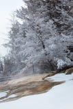 冻树 免版税库存照片