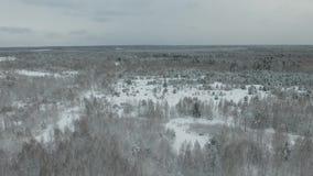 冻森林 股票录像