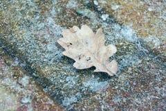 冻橡木叶子在冬天 免版税库存照片