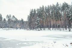 冻池塘和树在多雪的森林里 免版税图库摄影