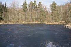 冻池塘在森林里 库存照片