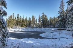 冻池塘,有雪的,晴朗的冷淡的天森林 库存照片