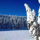 冻湖和雪被装载的树 免版税库存照片