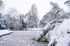 冻湖在树丛公园, Harborne 免版税库存照片