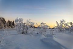 冻湖的布什日落的 库存图片