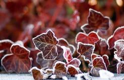 冻结叶子 免版税图库摄影