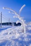 冻结小的结构树 库存照片