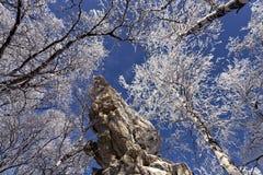 冻结岩石结构树 图库摄影