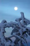 冻结月亮结构树 库存照片