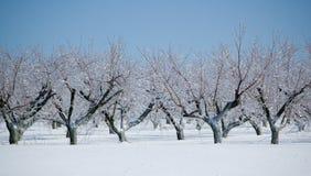 冻结果树园 库存照片