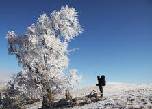 冻结查找的人结构树 图库摄影