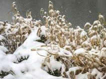 冻结池塘 在他前面的岸干燥黄色草和刺柏树丛在雪下 免版税库存照片