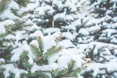 冻结的具球果分支在白色冬天 暴风雪 库存图片