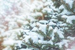 冻结的具球果分支在白色冬天 暴风雪 免版税库存图片