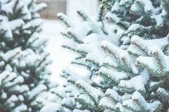 冻结的具球果分支在白色冬天 暴风雪 图库摄影