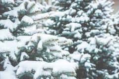 冻结的具球果分支在白色冬天 暴风雪 免版税库存照片