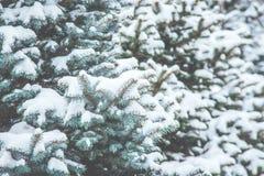 冻结的具球果分支在白色冬天 暴风雪 库存照片