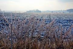 冻结的农田和分支在一个朦胧的冬天 库存照片