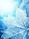 冻结的叶子纹理 免版税库存照片