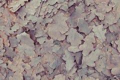 冻结的叶子背景 库存图片