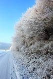 冻结的本质 库存照片