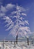 冻结的树型视图冬天 库存照片