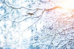 冻结的树枝细节与掠夺鸟的 库存图片