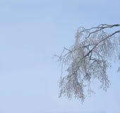 冻结的树枝 图库摄影
