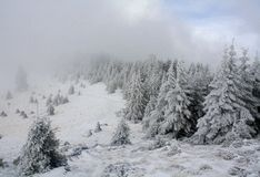 冻结的森林 免版税库存照片