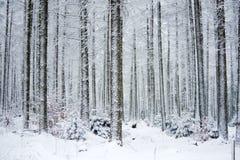 冻结的森林 免版税库存图片