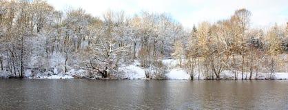 冻结的横向结构树冬天 免版税图库摄影