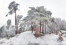 冻结的横向结构树冬天 库存图片