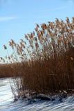 冻结的沼泽地冬天 免版税库存图片