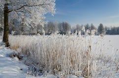 冻结的湖海岸符号 库存照片