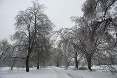 冻结的结构树冬天 库存照片