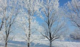 冻结的结构树冬天 图库摄影