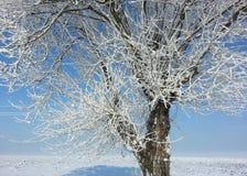 冻结的结构树冬天 免版税库存照片