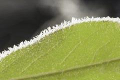 冻结的绿色叶子宏指令 库存照片