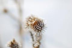 冻结的花 图库摄影