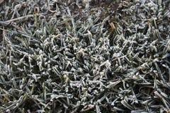 冻结的草关闭 库存照片