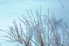 冻结的草冬天背景 免版税库存照片